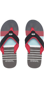 2019 Animal Mens Jekyl Swim Flip Flops Rød FM9SQ010